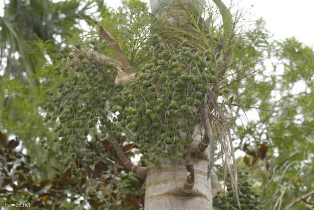 cu0143___orchideengarten_in_soroa.jpg