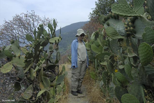 it2006-105__cinque_terre,_italien_2006_elfi_im_kaktus.jpg