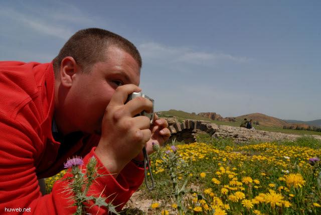 tn-2007-090___chemtou_(roem.simitthus),_27vchr,_ernst,_loewenzahn,_distel,_makrofoto,_roemische_bruecke,_tunesien_2007.jpg