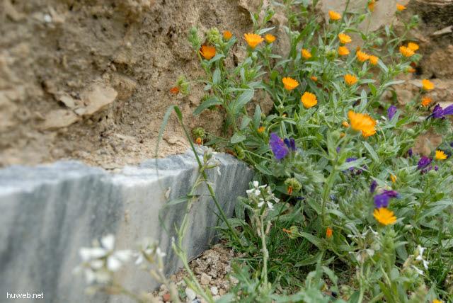 tn-2007-186___haidra,_marmor-sockel,_tunesien_2007.jpg