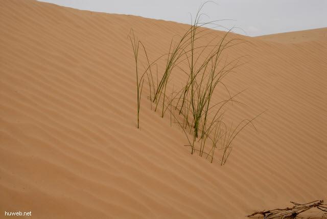 tn-2007-601___gras_in_der_sahara,_tunesien_2007.jpg