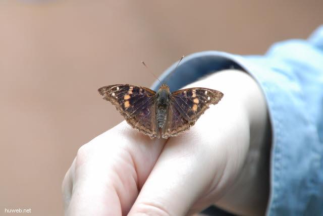 1.160_Iguacu_Nationalpark_Argentinien,_Schmetterling_.jpg