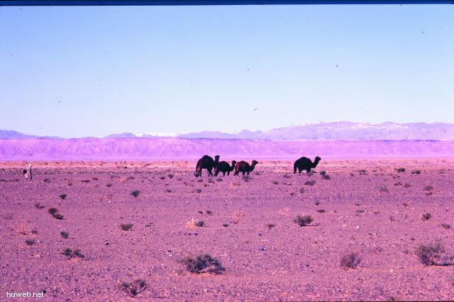 ad26_Fahrt_nach_Tinerhir___Marokko_27.12.85-5.1.86.jpg