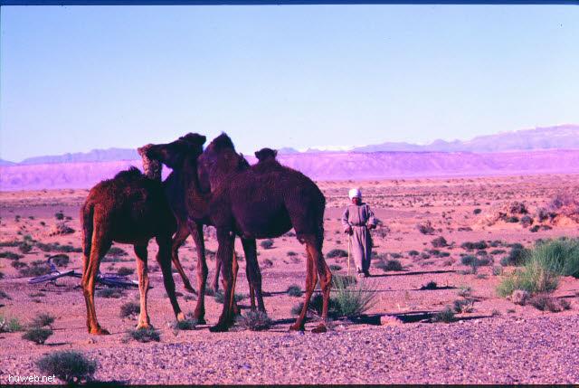 ad27_Fahrt_nach_Tinerhir___Marokko_27.12.85-5.1.86.jpg