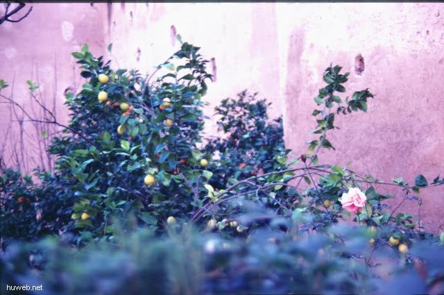 ae35_saadier-graeber,ende_16.jhdts.,_nekropole_marokko_27.12.85-5.1.86,_marrakech.jpg